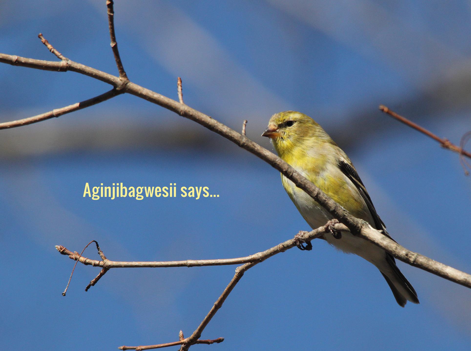 Aginjibagwesii says...