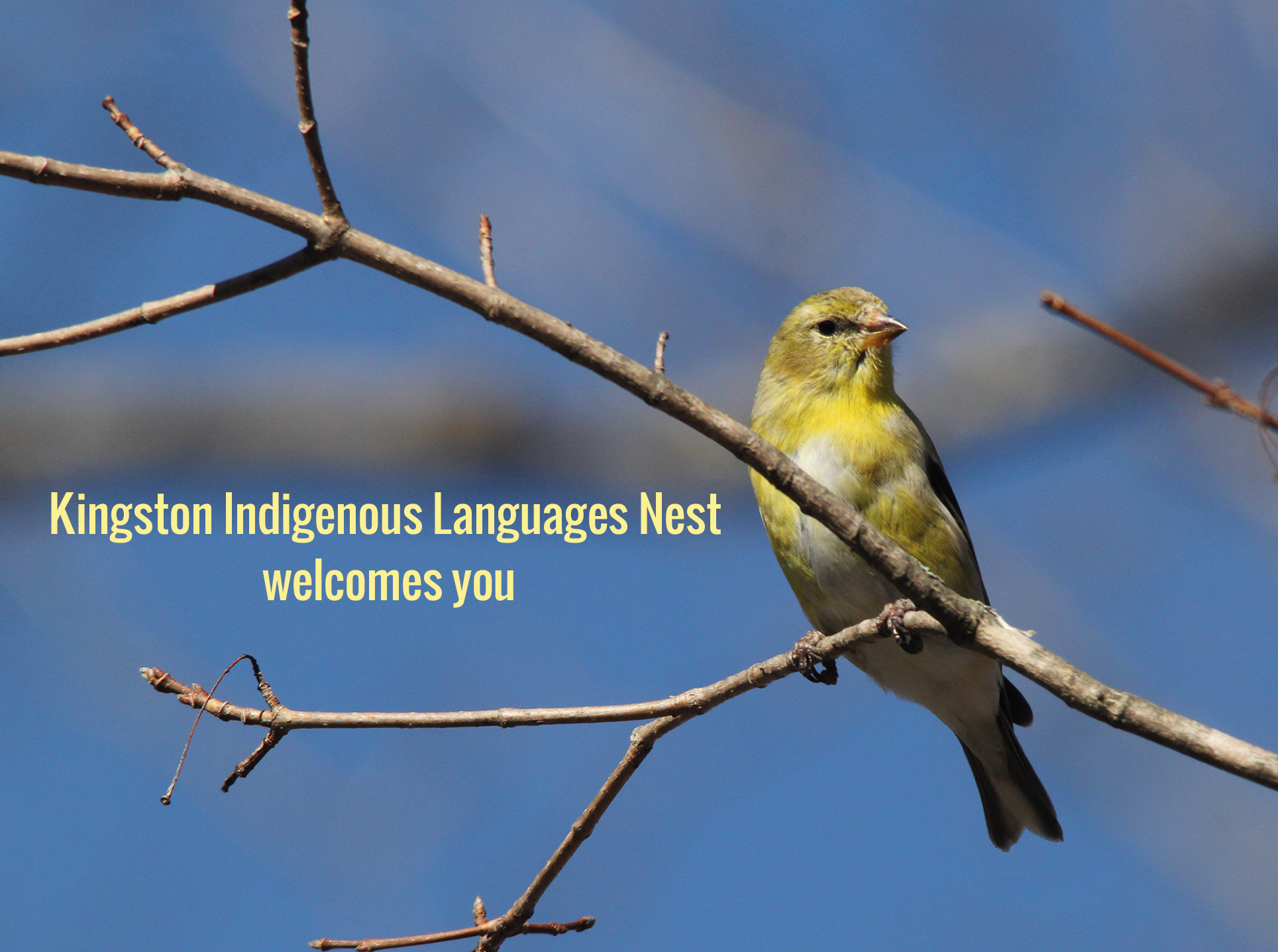 Kingston Indigenous Languages Nest welcomes you